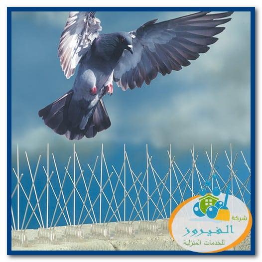 Photo of شركة مكافحة الحمام بالرياض 0548029945 خصم 30%
