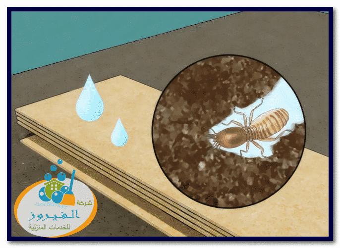 Photo of شركة مكافحة النمل الابيض بالرياض 0548029945 خصم 30%